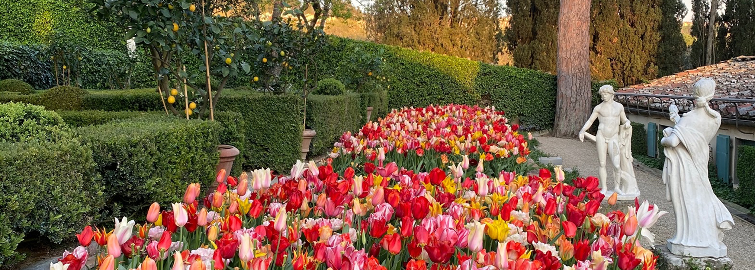 Image of the I Tatti garden with tulips